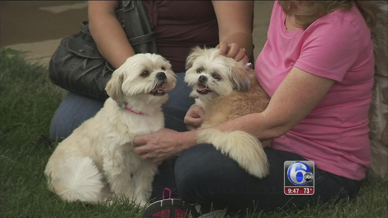 VIDEO: Shelter Me: Rescue Dogs Rock