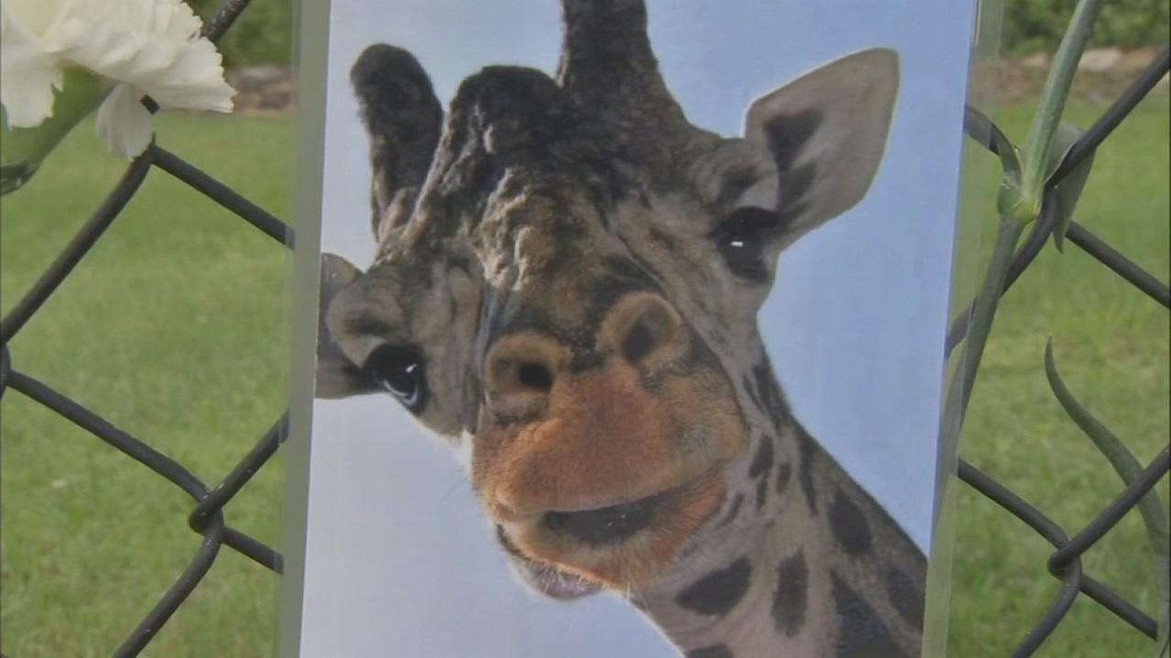 Giraffe dies at Lehigh Valley Zoo after possible neck injury