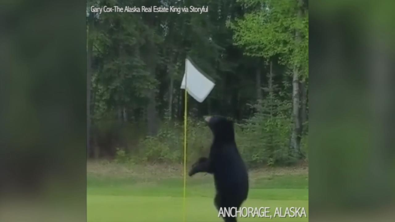 VIDEO: Bear crashes golf course