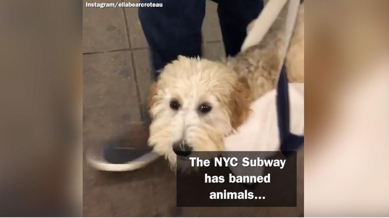 New York subway riders bring out their creative side after MTA sets new rules for animals on the subway.