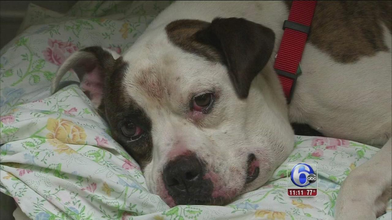VIDEO: Dog found chained, choking