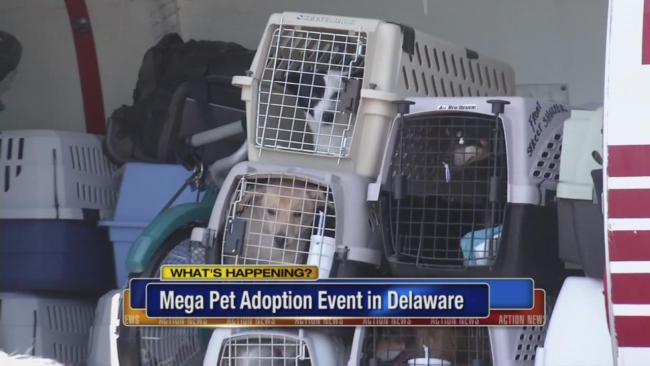 VIDEO: Mega pet adoption event in Delaware