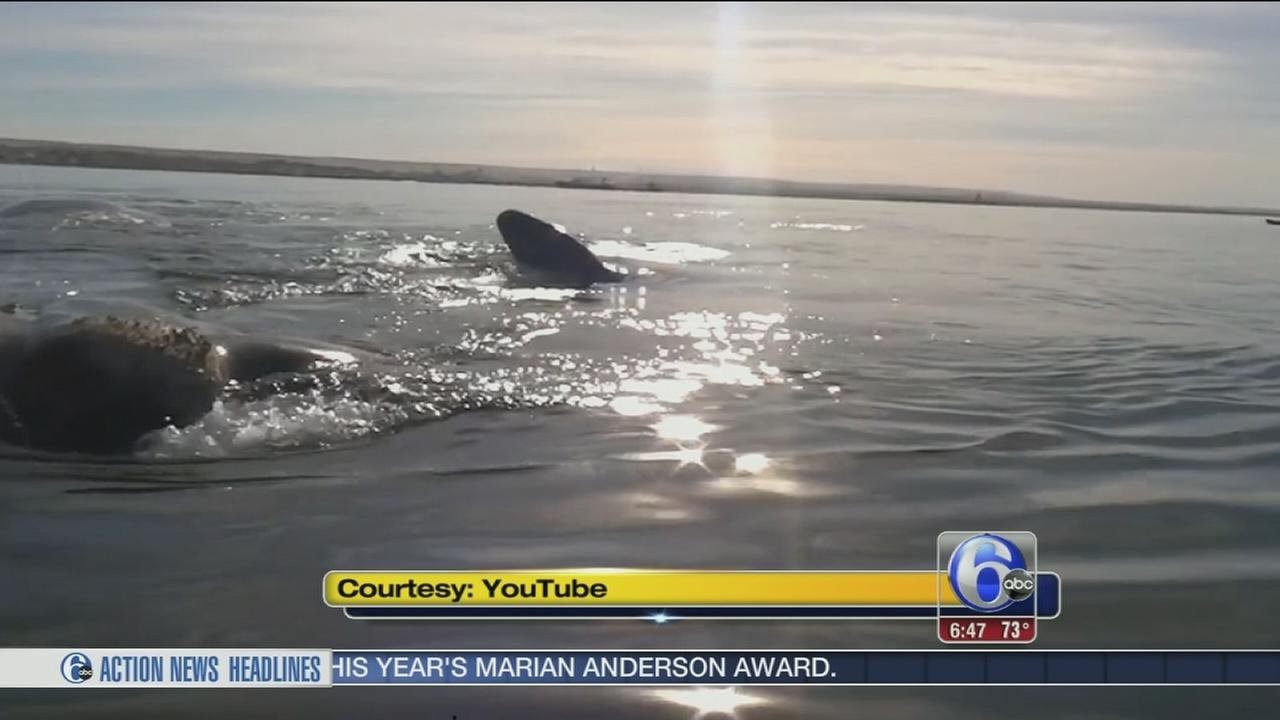 VIDEO: Kayakers have amazing encounter with whales