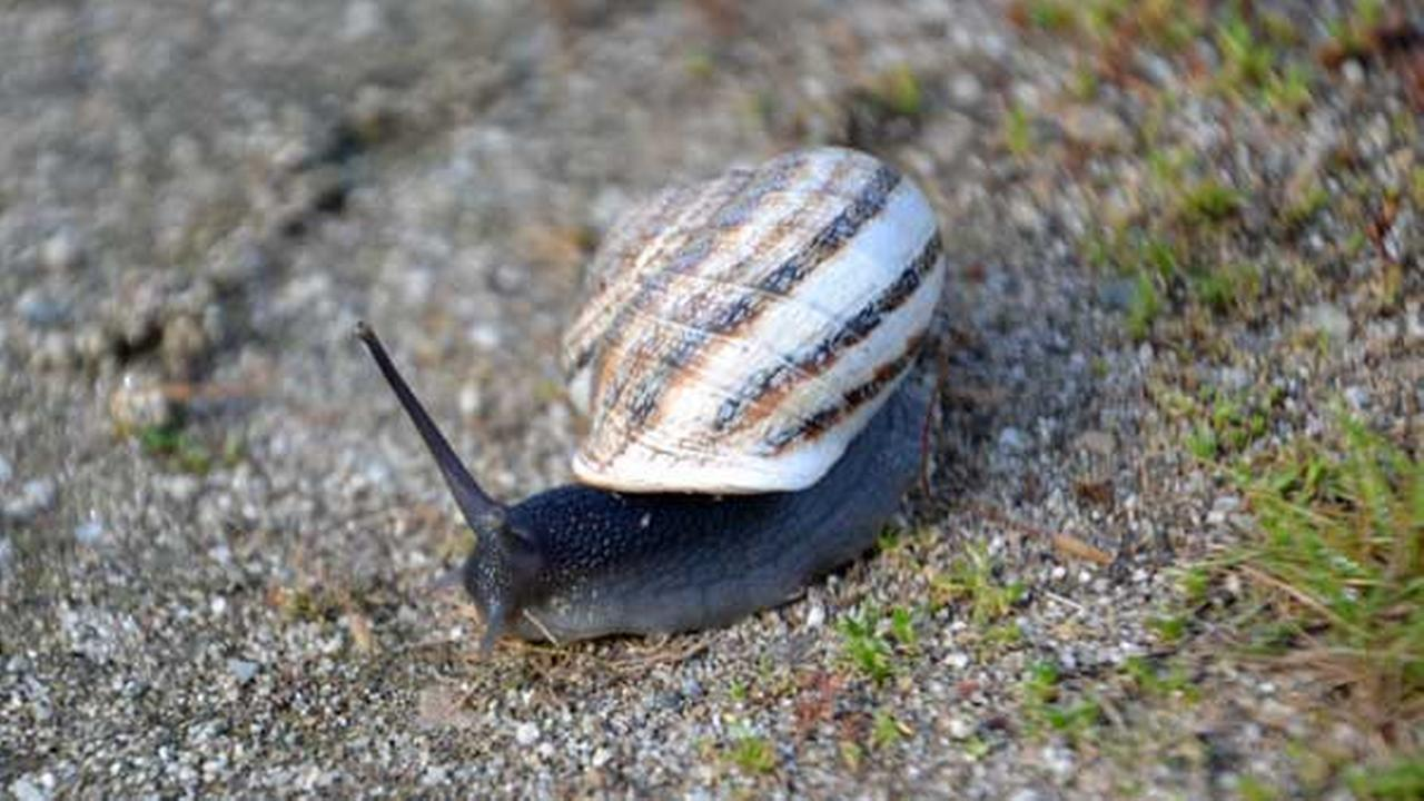 Customs agents in Philadelphia stop snails in mail