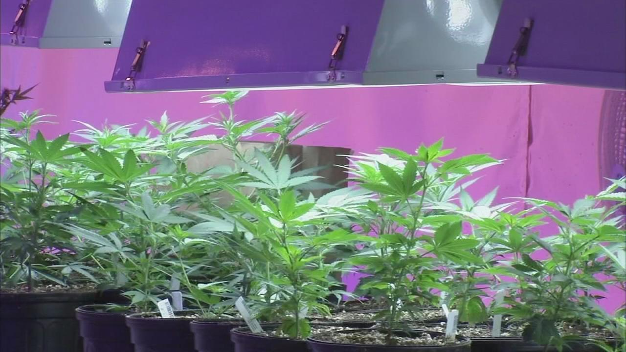 Pennsylvania issues permits to 12 medical marijuana growers