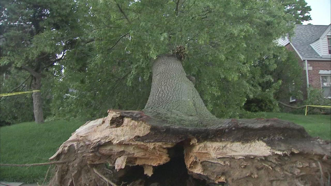 Trees fall on several streets in Philadelphia