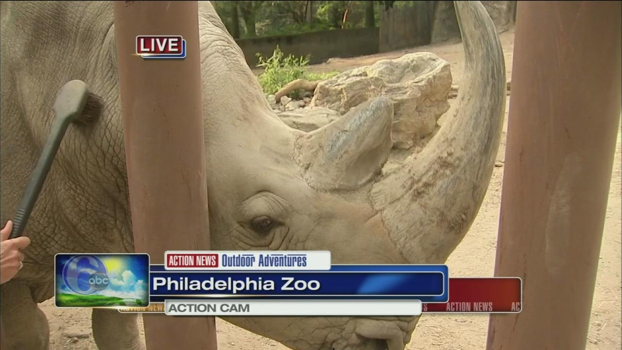 VIDEO: Cecily with Tony the Rhino at the Zoo
