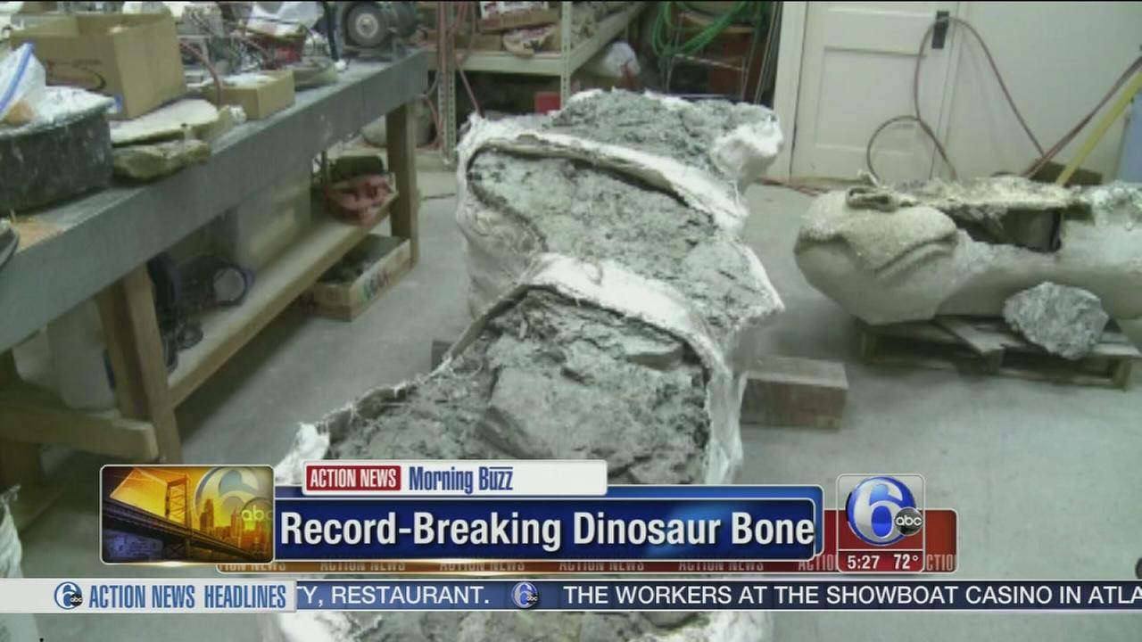VIDEO: Record breaking dinosaur bone found