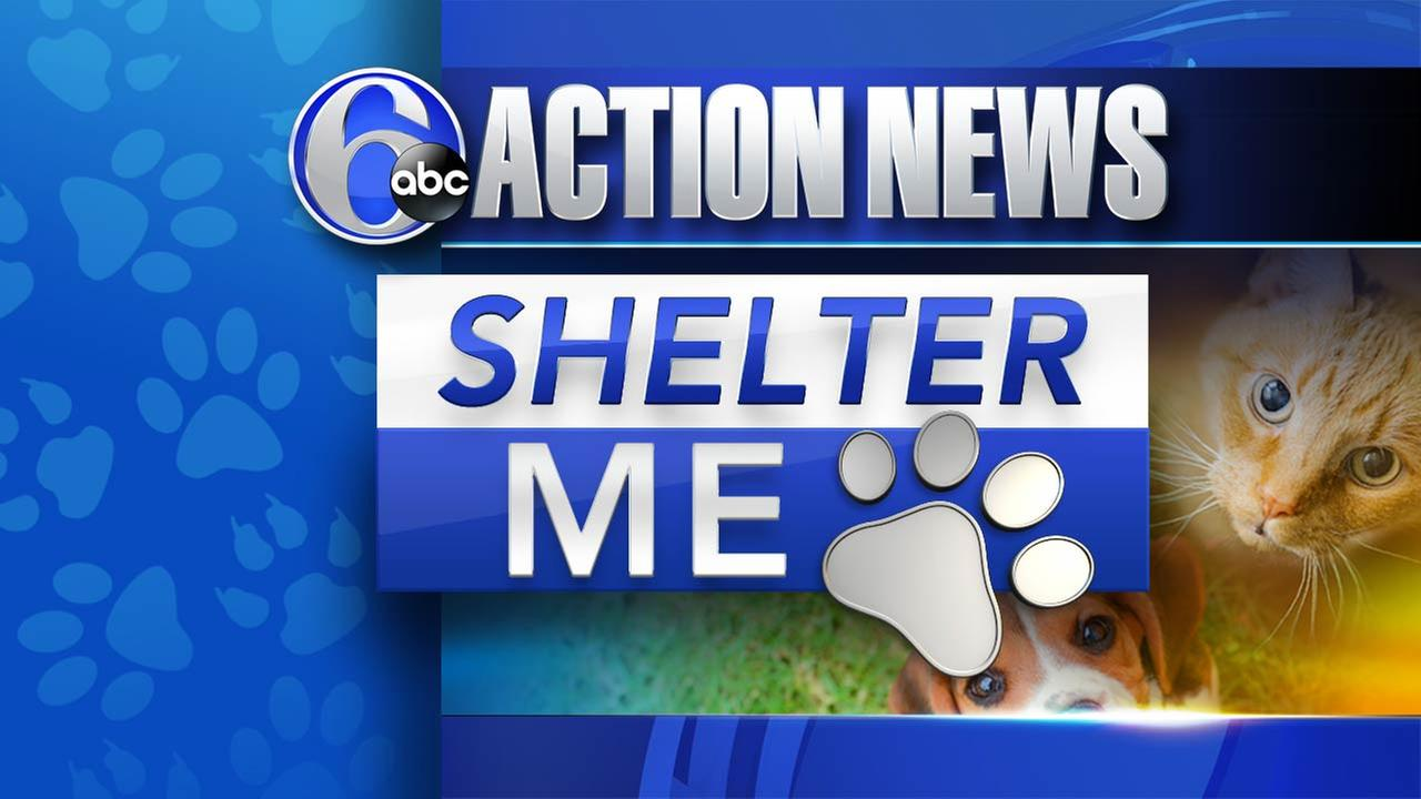 Shelter Me: Pennsylvania SPCA