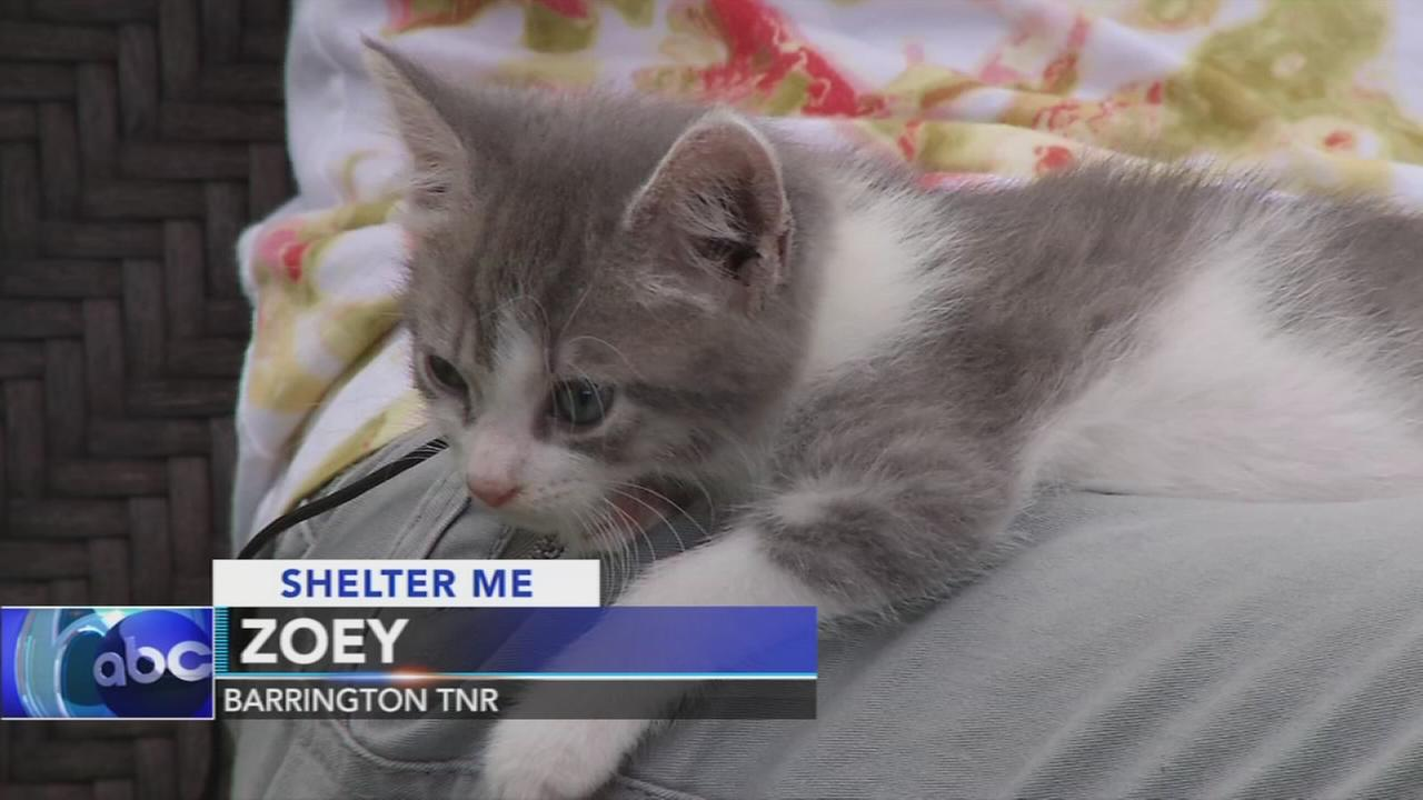 Shelter Me: Barrington Trap, Neuter, Release