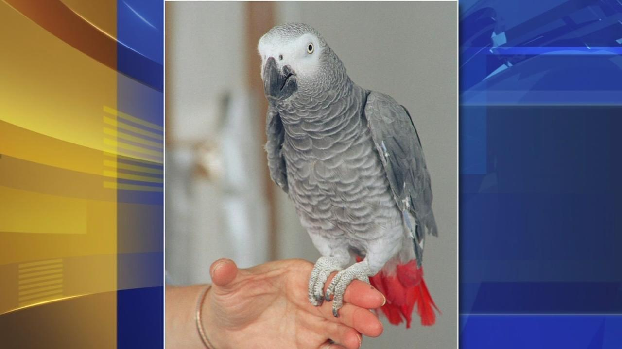 Exotic birds stolen from Berks Co. petting zoo