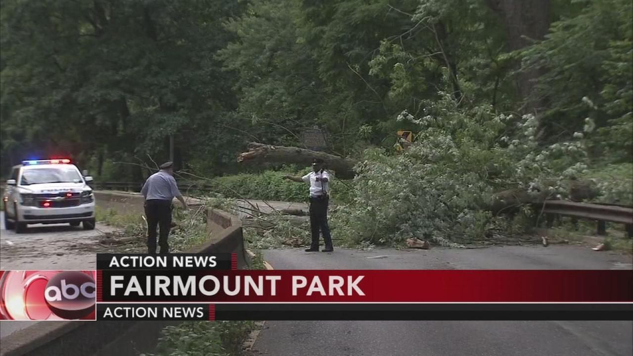 Large tree falls in Fairmount Park
