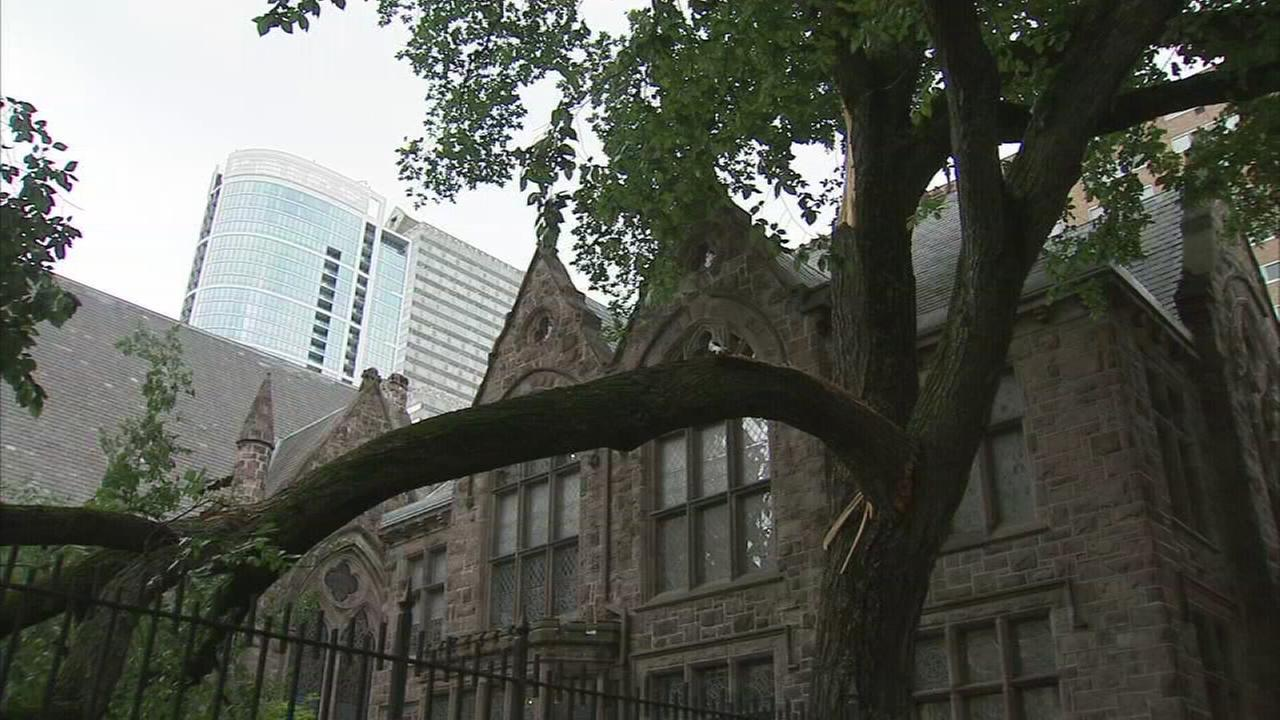 Historic tree damaged in storm