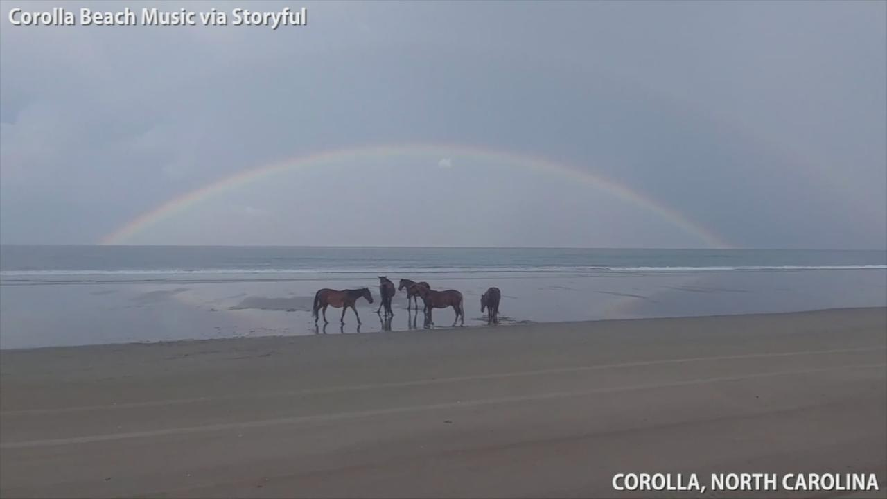 Rainbow forms as wild horses relax on North Carolina beach