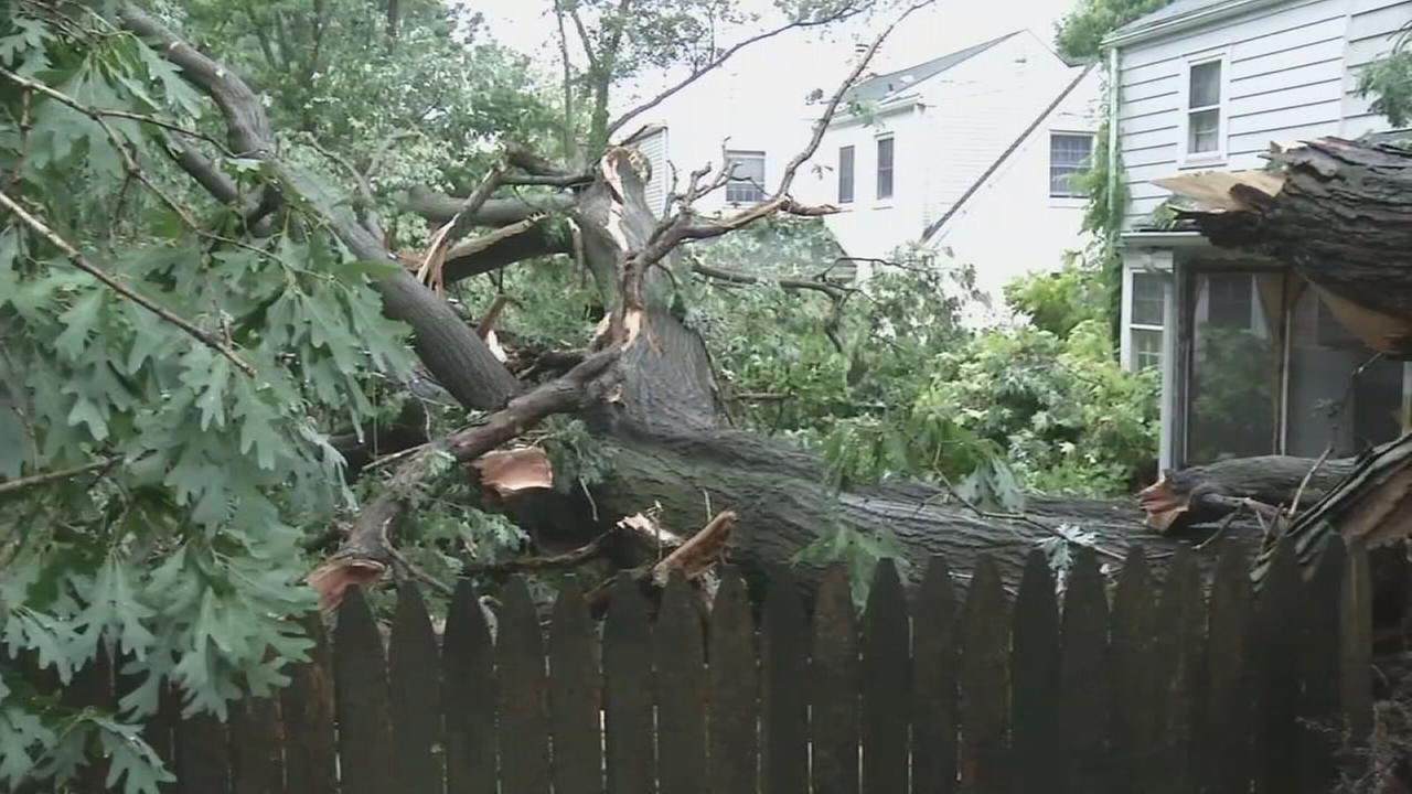 Tree falls near Wilmington home