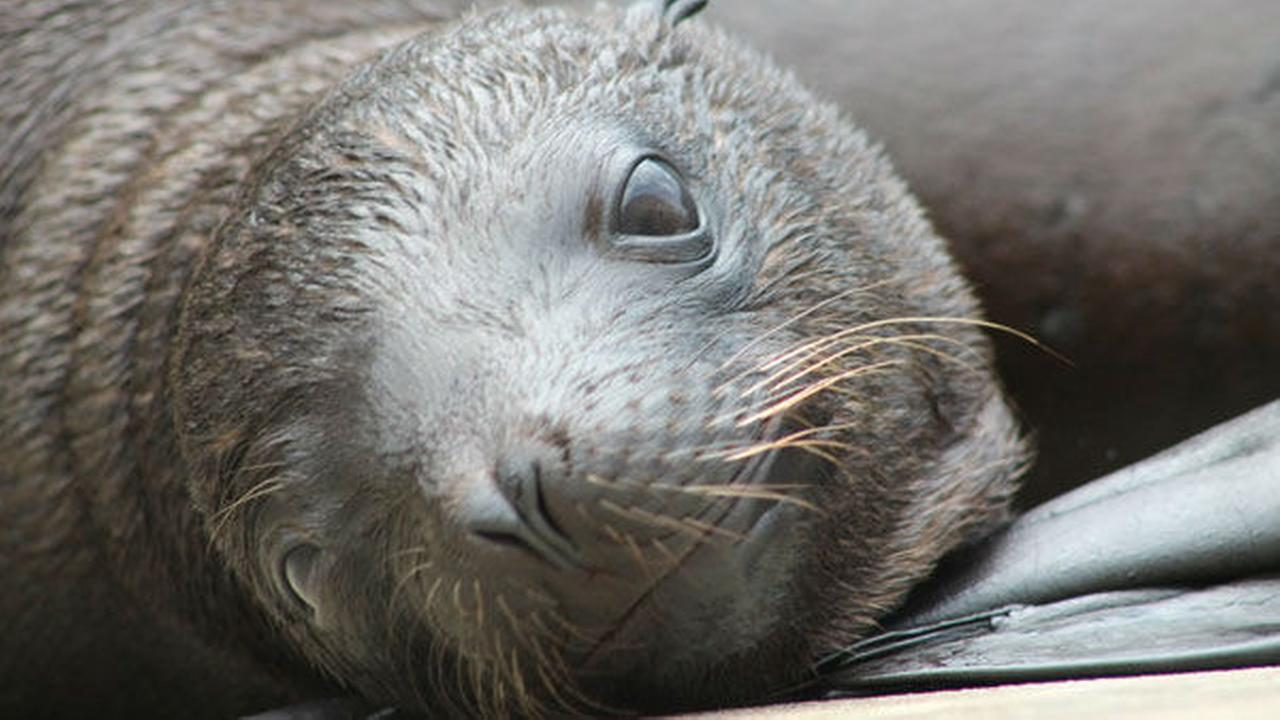 PHOTOS: Six Flags welcome sea lion pup