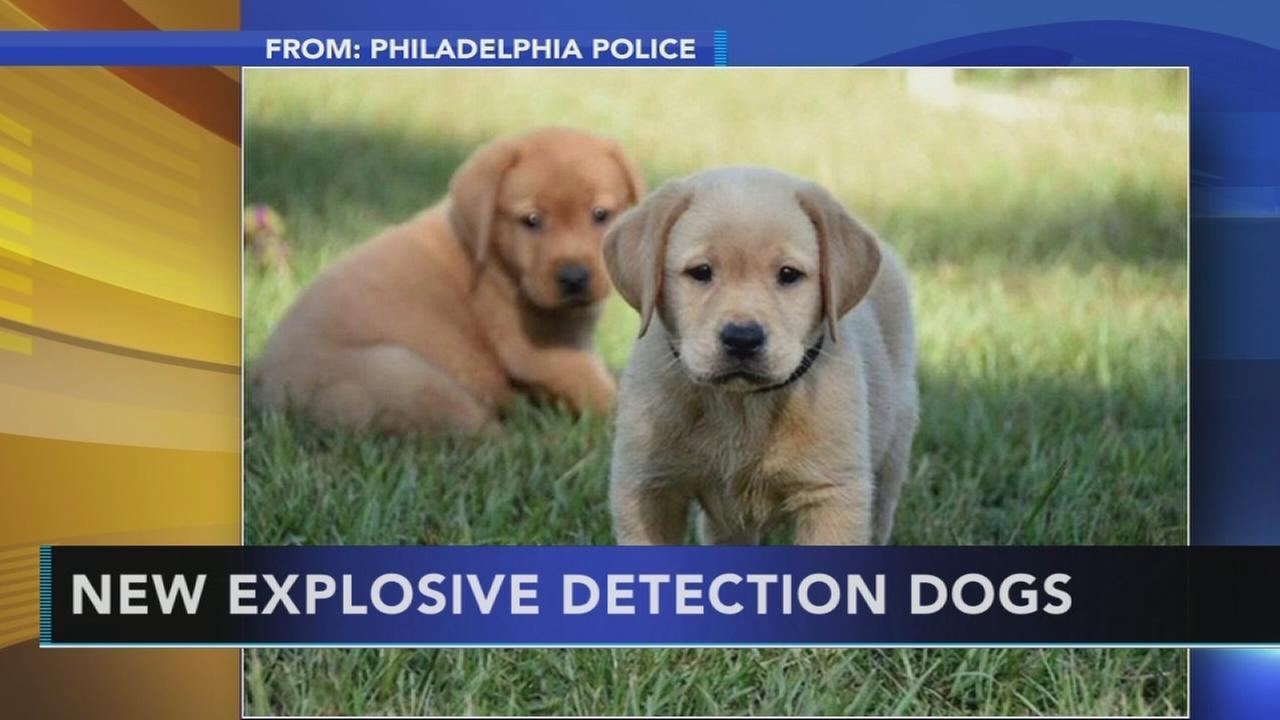Philadelphia police show off new explosive detection dogs