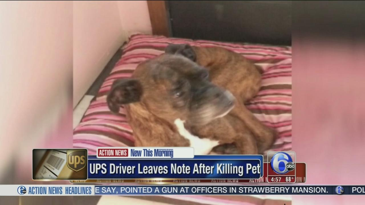 VIDEO: Deliveryman accidently kills homeowners pet