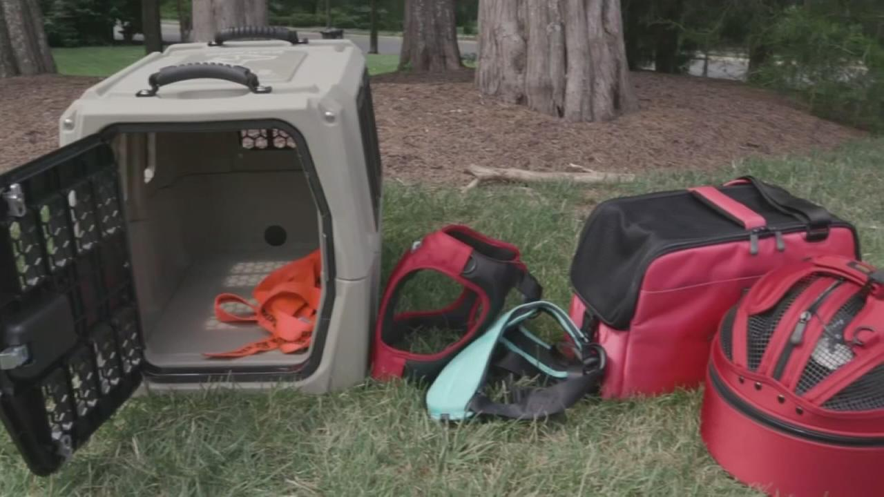Consumer Reports: Traveling safely with your pets