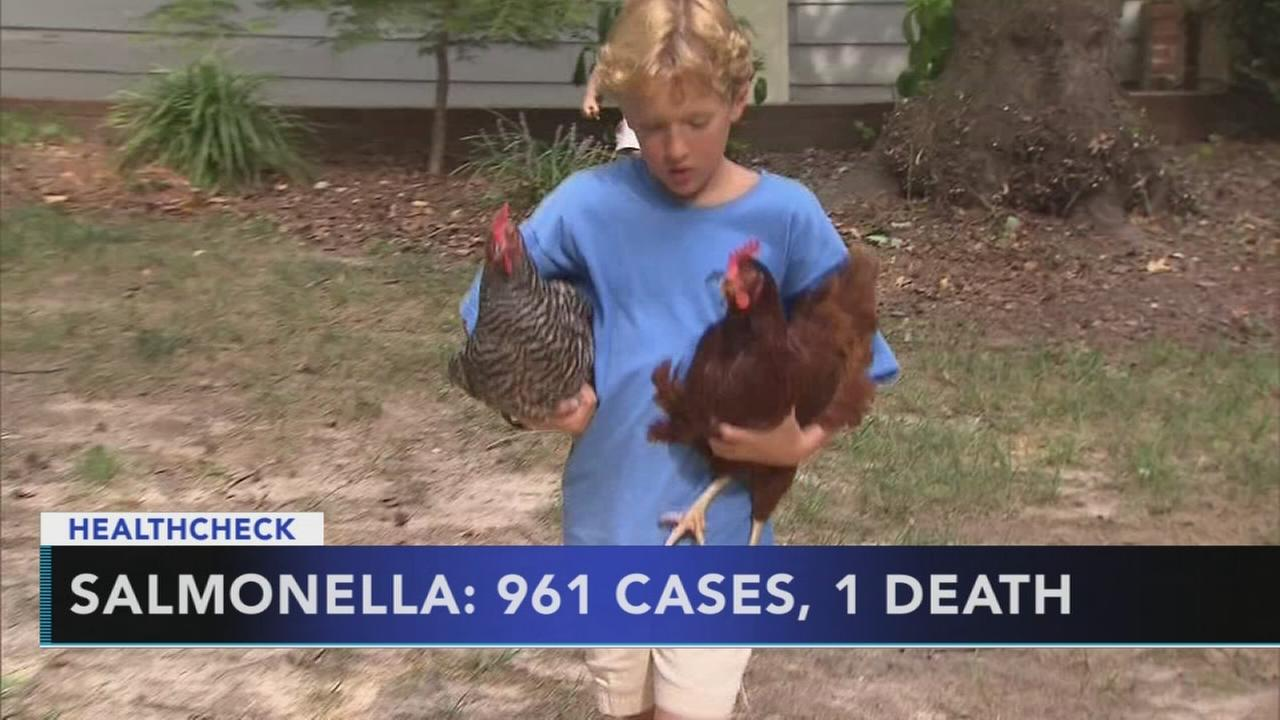 Backyard chicken coups to blame for rise in salmonella