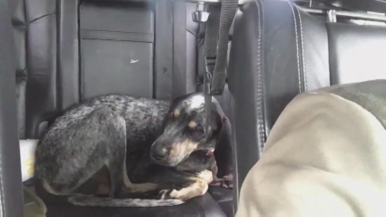 VIDEO: Dog lost in Harvey reunited with owners