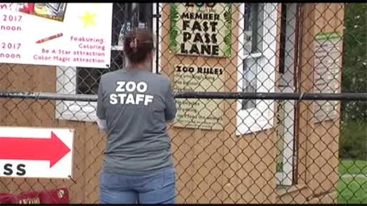 Bobcat escapes enclosure, disrupts zoo visits, beer festival in Lehigh Valley