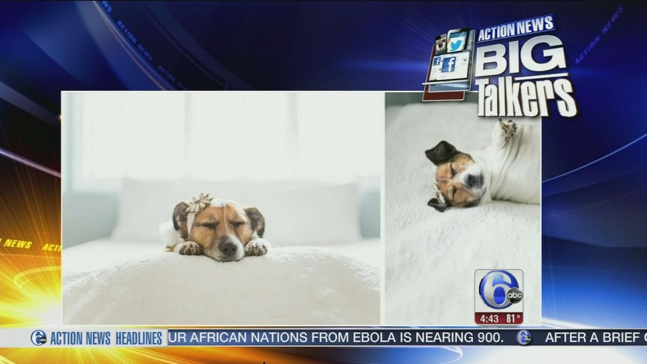 VIDEO: Puppy parents get professional baby pics