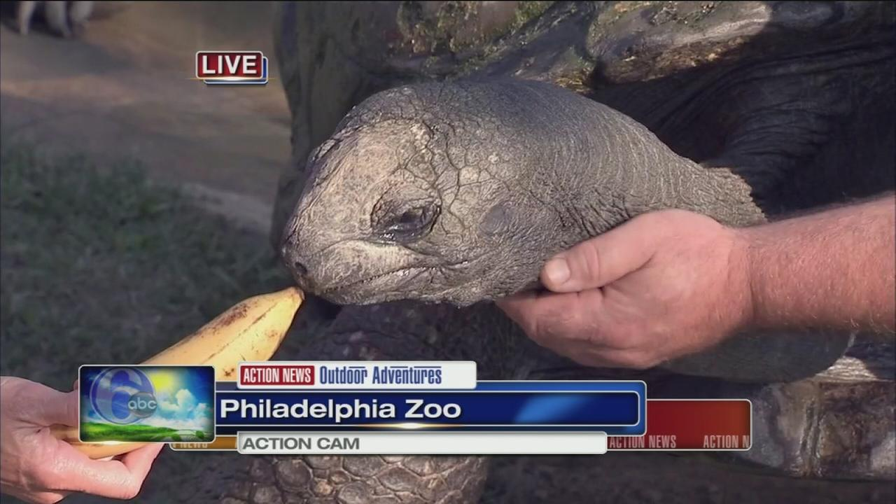 VIDEO: Cecily at the Zoo with Bubba the Tortoise