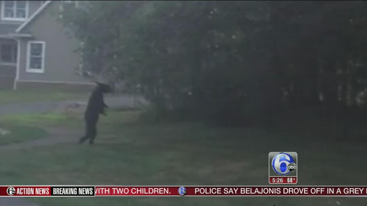 VIDEO: Bear caught walking around in N. Jersey neighborhood