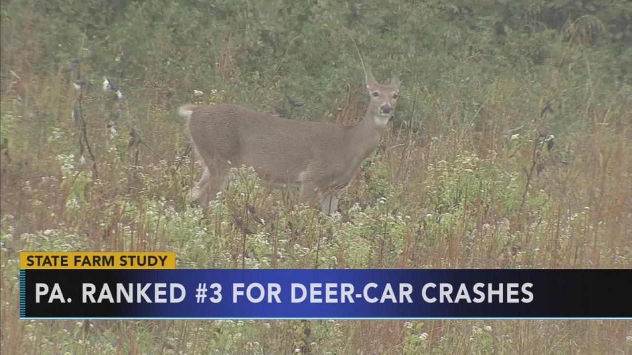 Pa. ranked No. 3 for deer-car crashes