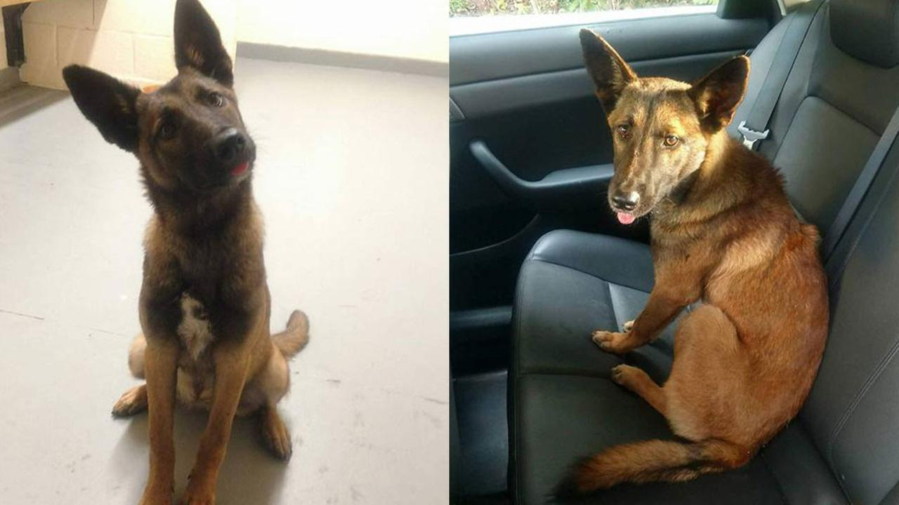 NJ Troopers rescue dog who didn't want to leave dead dog's side