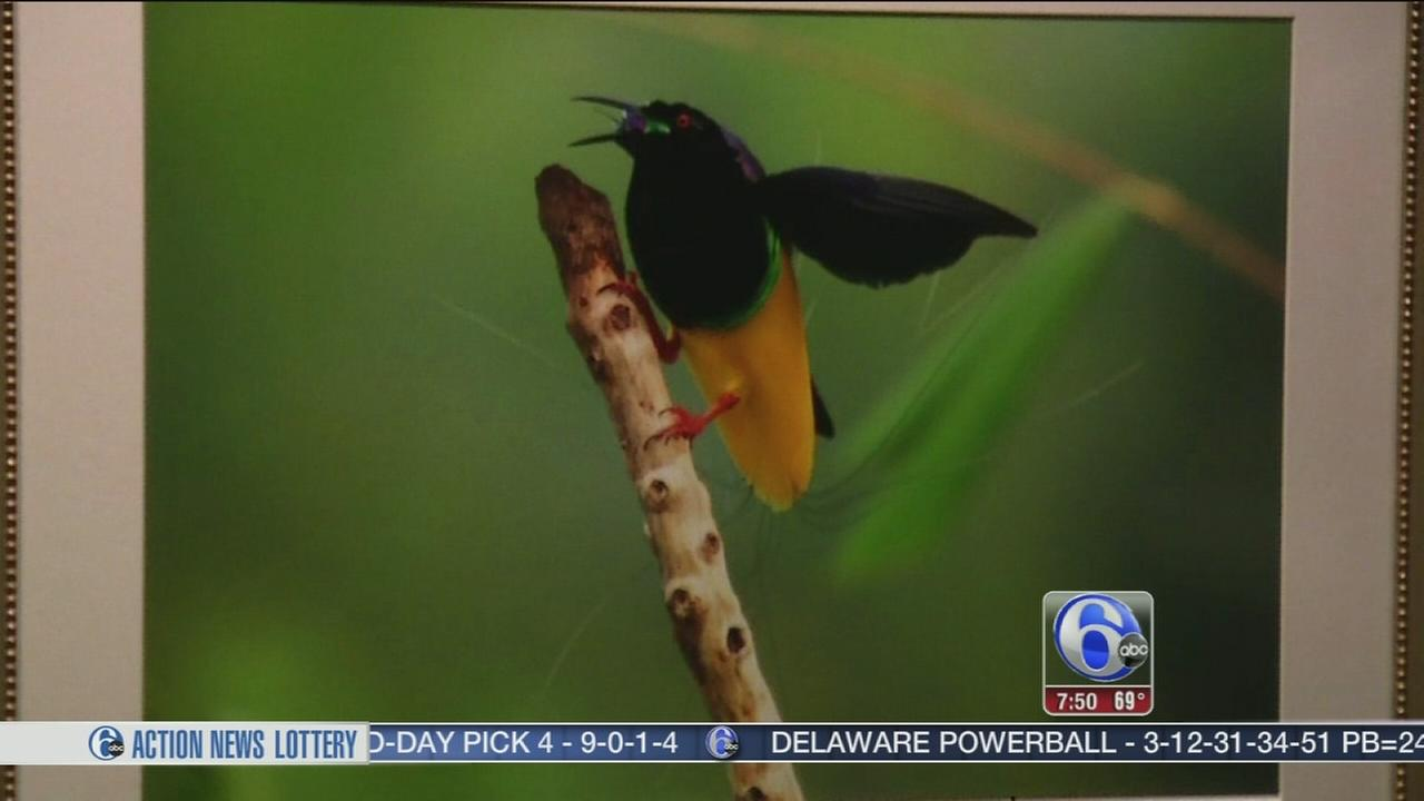 Birds of Paradise - 6abc Loves the Arts