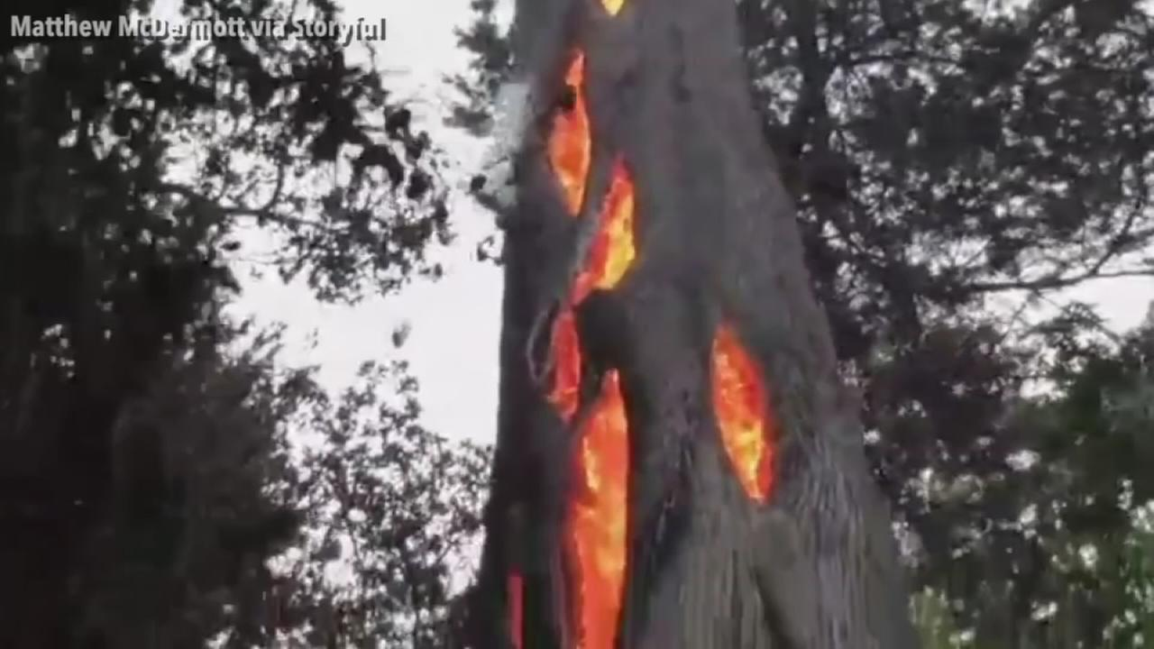 VIDEO: California wildfire burns in hollowed out tree