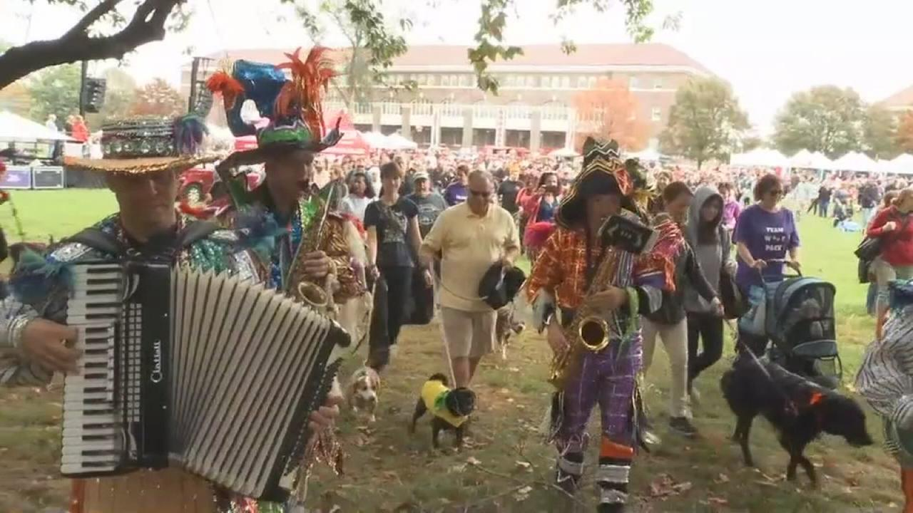 Dogs and owners dress for PAWS Mutt Strut in South Philly