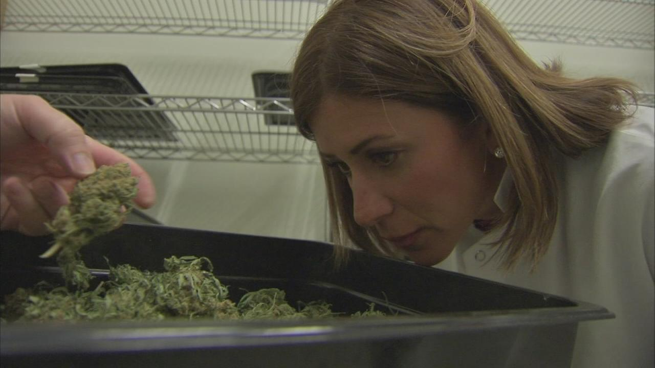 6abcs Wendy Saltzman tours a medical marijuana grow facility
