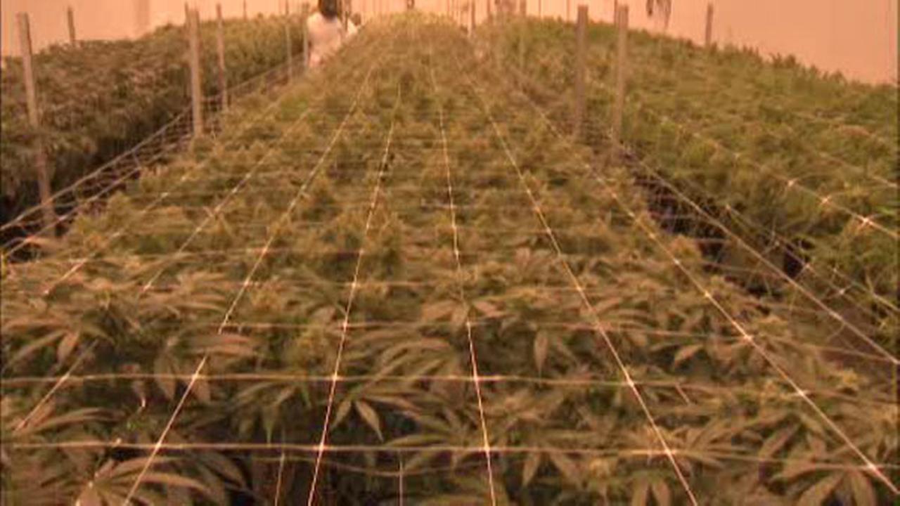 Vote to release marijuana legalization panel report fails