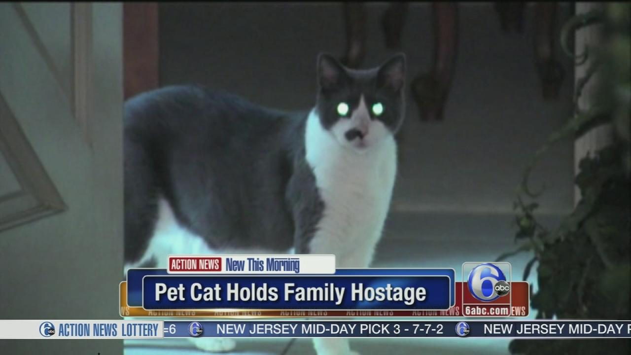 Video Pet Cat Holds Family Hostage Abc7chicago Com