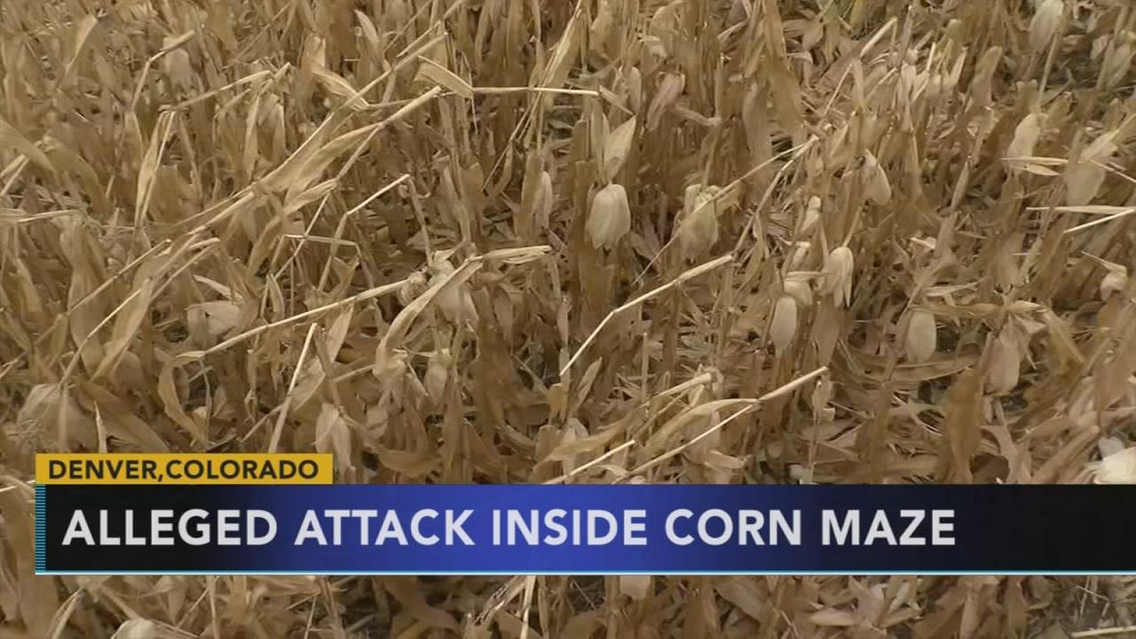Alleged attack inside corn maze