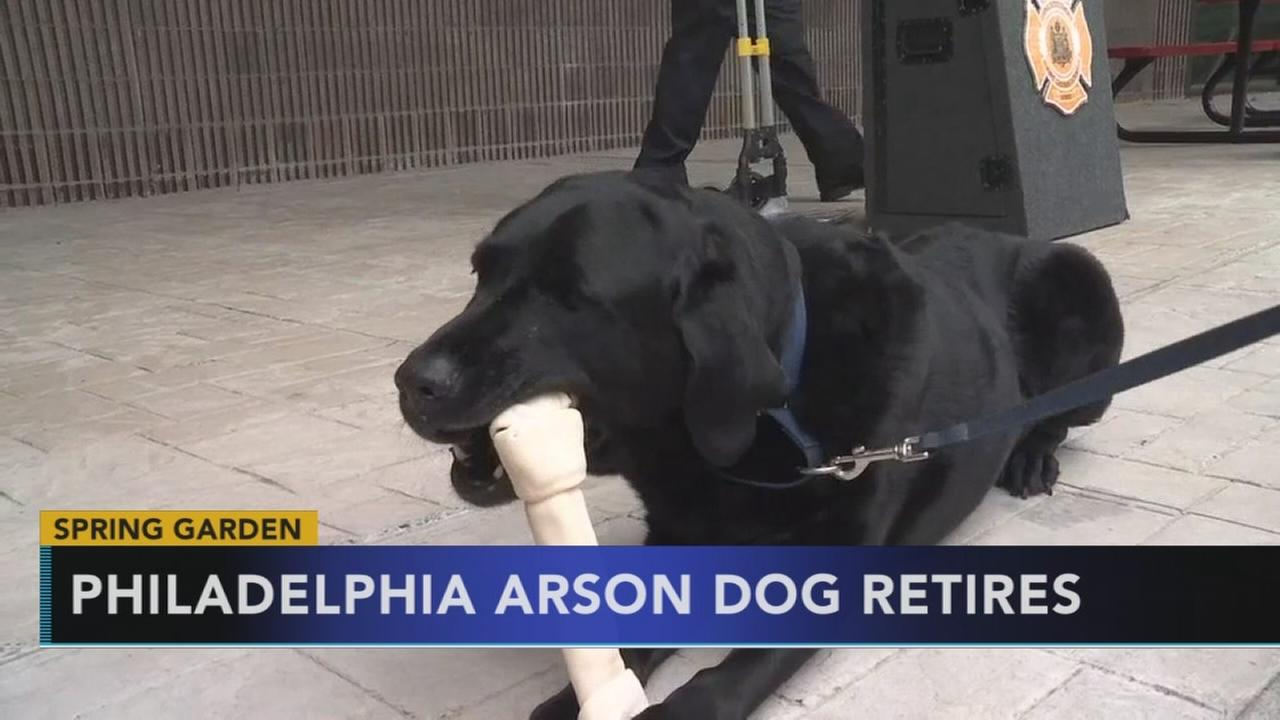 VIDEO: Arson dog retires from Philly FD