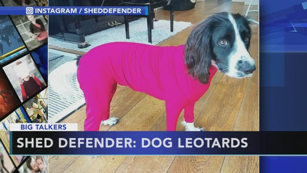 VIDEO: Dog leotards