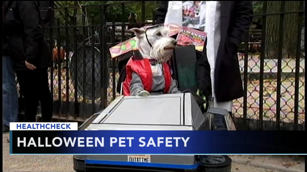 Precautions to take to protect your pets this Halloween