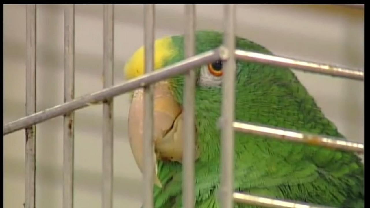 Store parrot retires