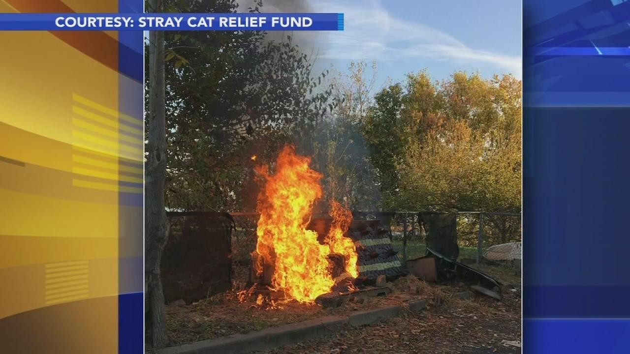 Non-profit raises funds for cat shelter destroyed by fire
