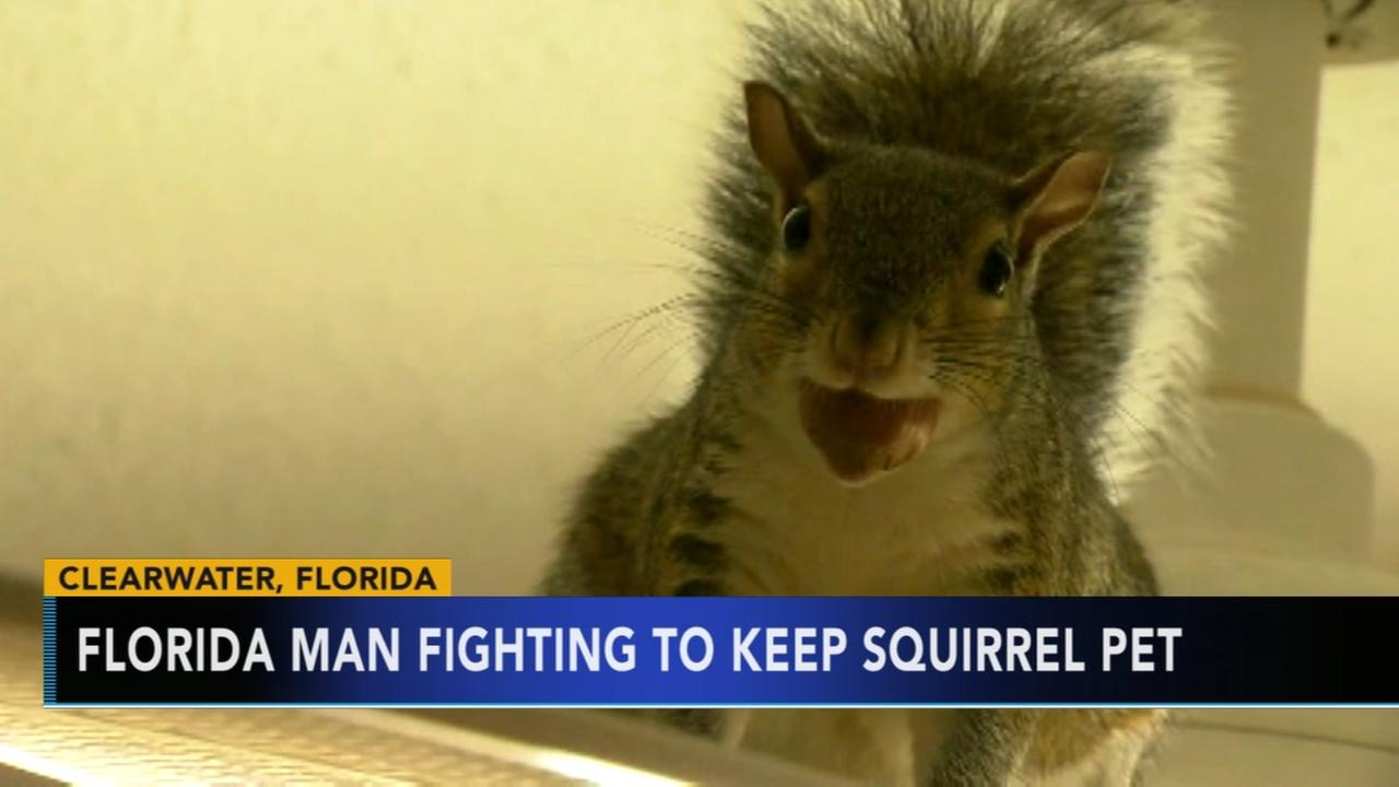 Florida man fighting to keep pet squirrel