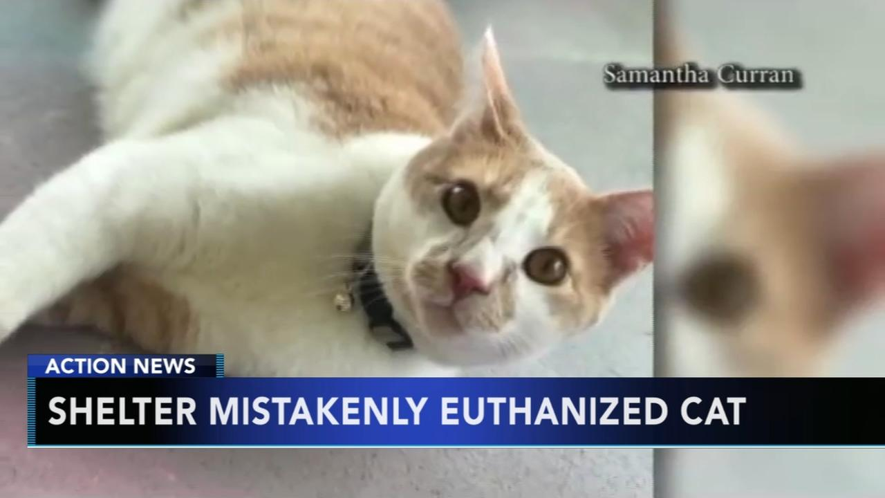 Shelter mistakenly euthanized cat
