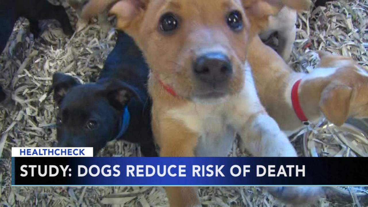 Study: Owning a dog can reduce your risk of death