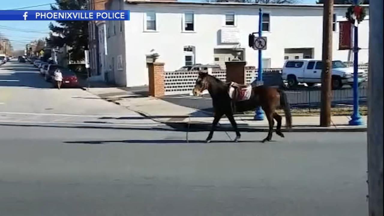 Horse runs through downtown Phoenixville