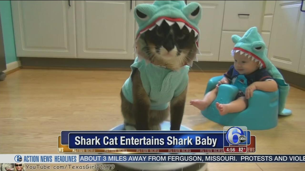 VIDEO: Shark cat entertains shark baby