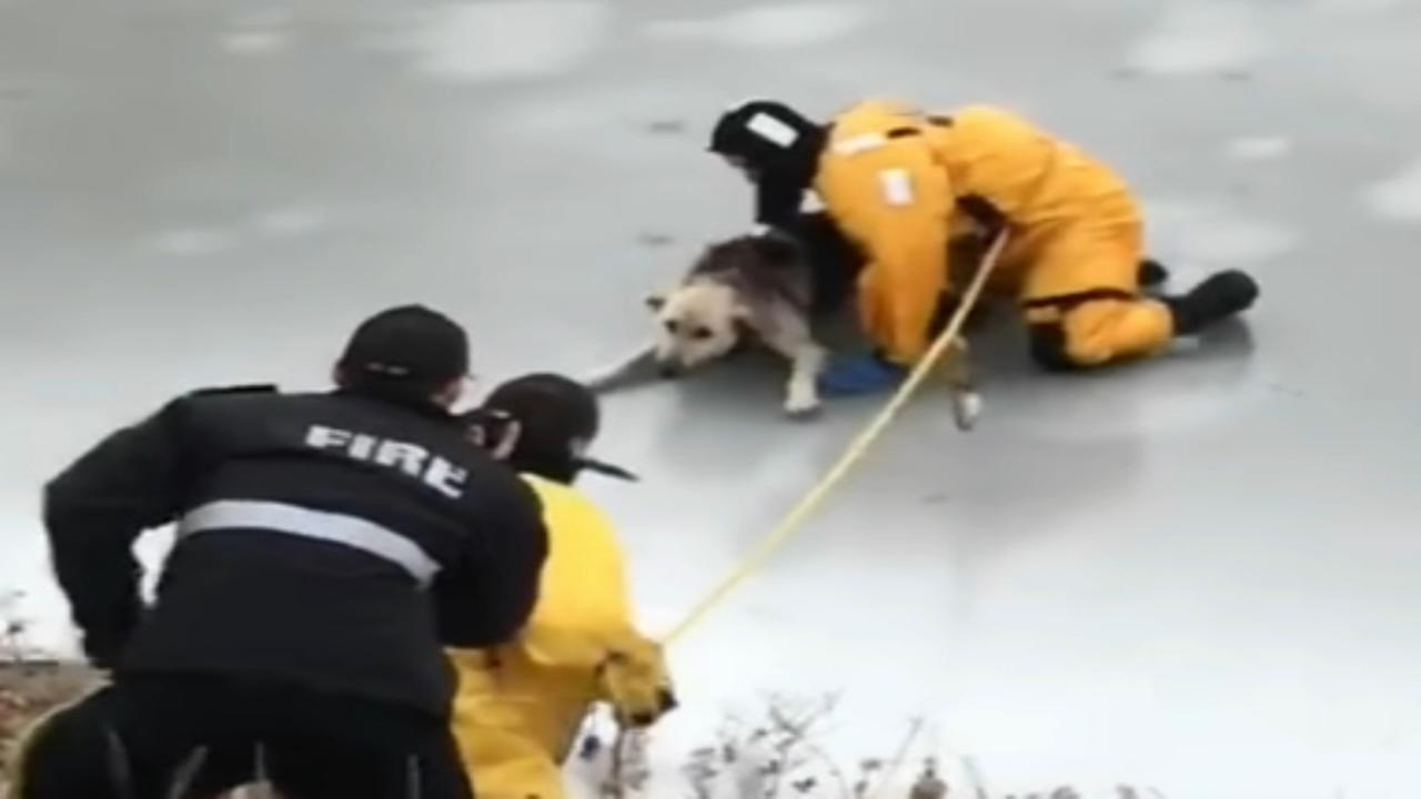 Dog rescued from icy creek