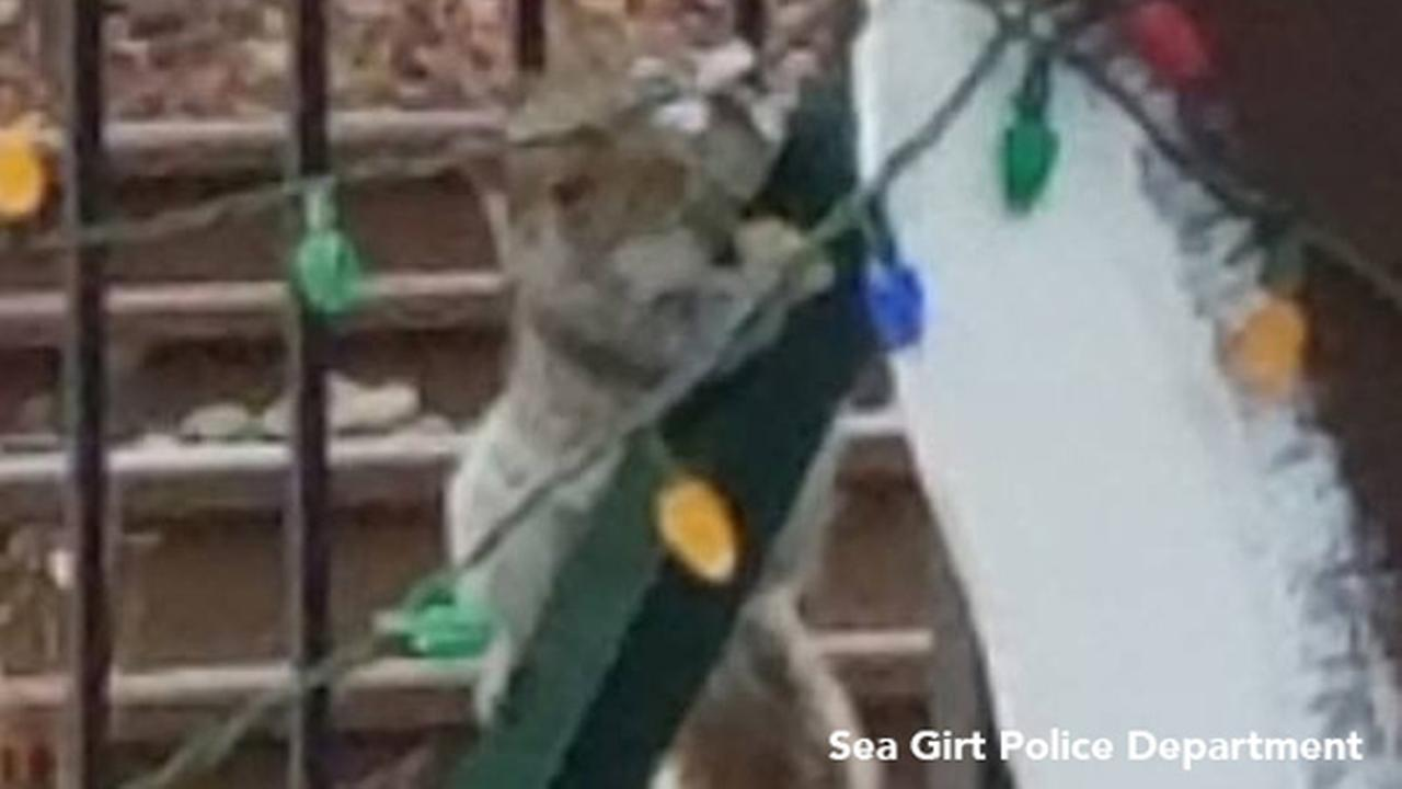 Squirrel blamed for vandalizing Christmas lights, police say